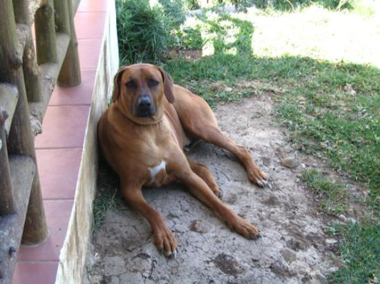 Ecolodge Inn at Coyote Mountain: The extremely friendly, Claudius