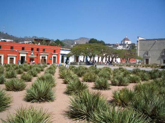 Oaxaca Ollin: witness the scenery