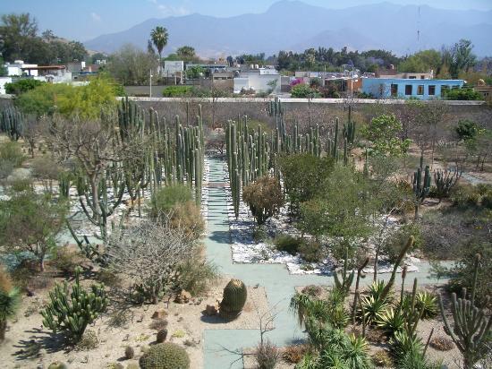 Oaxaca Ollin: one block away from the casa