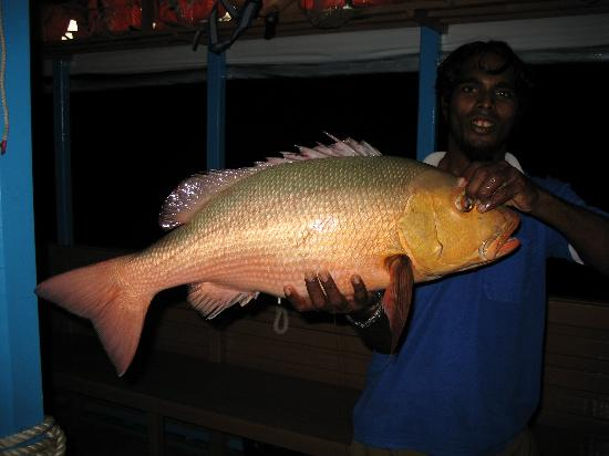 Veligandu Island Resort & Spa: Dinner!