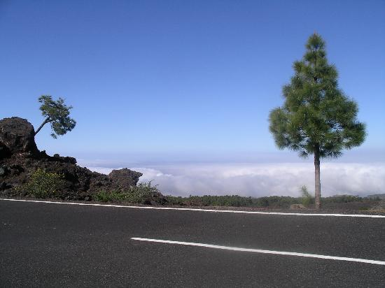 Vincci Seleccion La Plantacion del Sur: The road to Teide