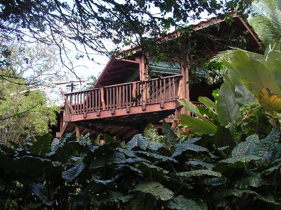 Playa Nicuesa Rainforest Lodge : Main Lodge