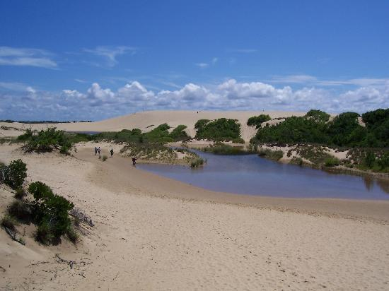 Outer Banks, Carolina del Norte: Little ponds in the dunes after a rainstorm!