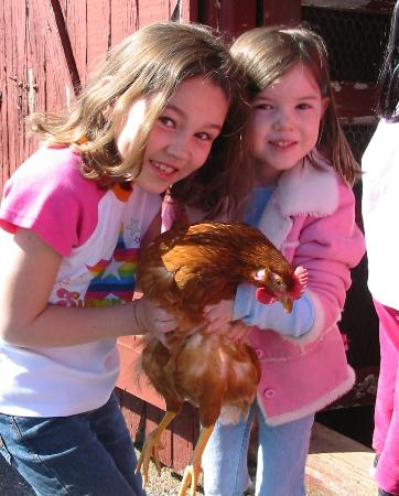 Country Log House and Farm: feeding the chickens