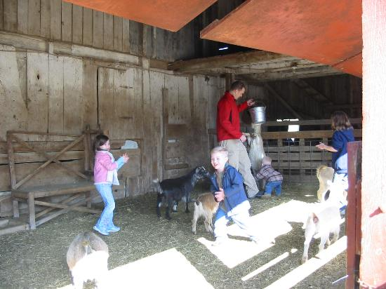 Country Log House and Farm: the goats loved us =)