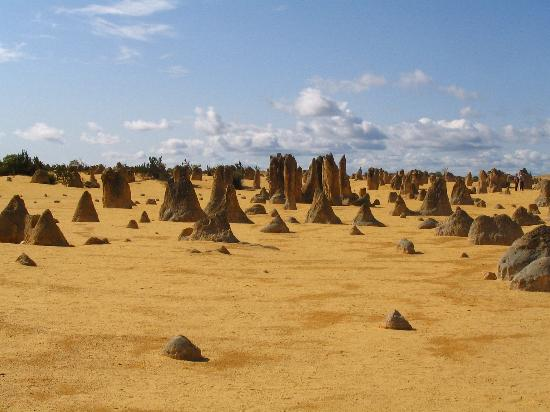 The Pinnacles Wa Australia Picture Of Western