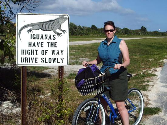Conch Club Condominiums: Iguanas have right of way. Seriously.