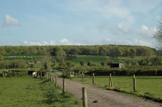 Ardsollus Farm: Ardsollus grounds