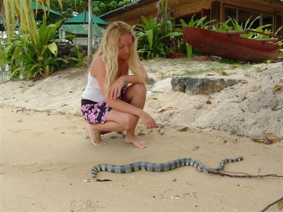 Toberua Island Resort: Me with a sea snake