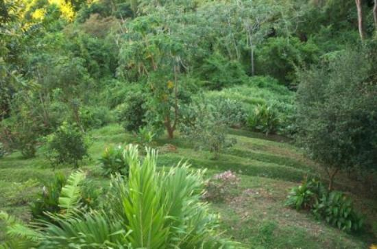 Paradise Point Villas : Orchard Trail (Landscaping on Hillside)