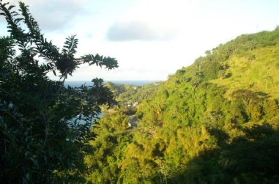 Paradise Point Villas: Ocean and Trees (View #2 from Villa)