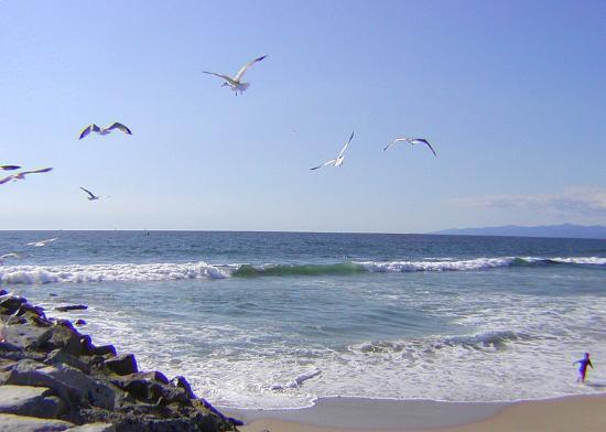 Ελ Σεγκούντο, Καλιφόρνια: El Segundo's Beach