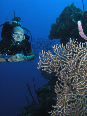 Compass Point Dive Resort: Scuba diving with Ocean Frontiers
