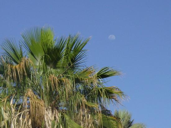 Hotel Cuesta Real: Moon Rise Over Palms