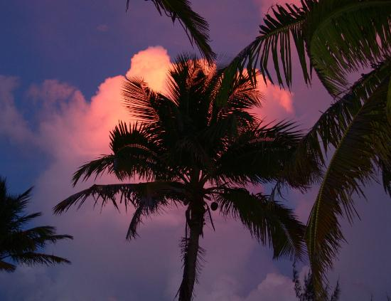 Andros Beach Club: Sunset and sky and palm