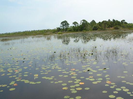 Savannas Preserve State Park Photo