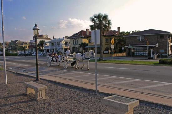 Of the many horse drawn carriages you will see around st augustine