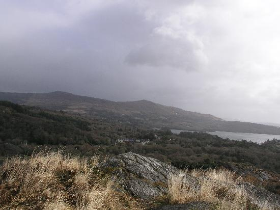 Glengariff Woods: top of hill (short, windy trail)