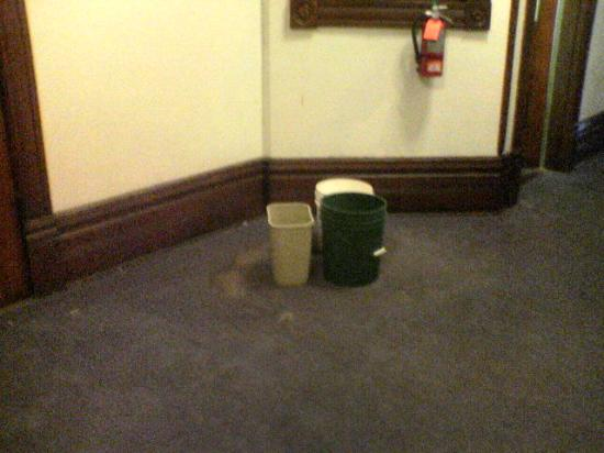 The Belmont Inn: Carpet stains and buckets