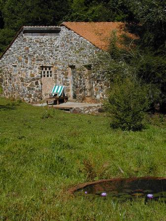 La Bonita Guest House: Cabin and lily Pond