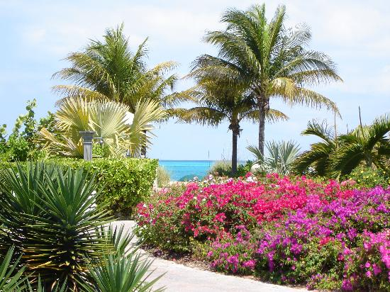 Royal West Indies Resort: Lush grounds
