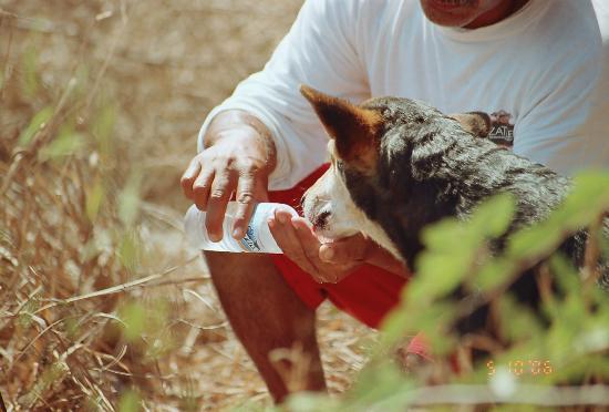 Mazatlan, Meksika: Water for the Resident Dogs