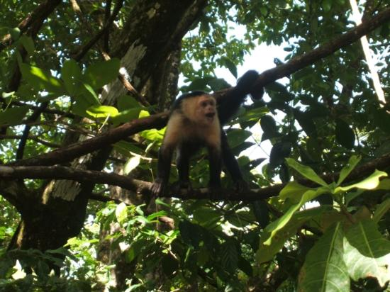 Marenco Beach & Rainforest Lodge: Monkeys Don't Like Dogs