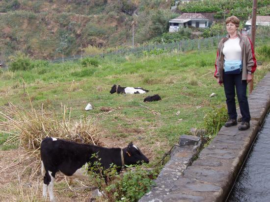 Estalagem Monte Verde & Melba: Levadawalk dos Piornais