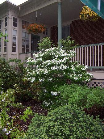 The Lafayette Inn: Azalia bushes in bloom