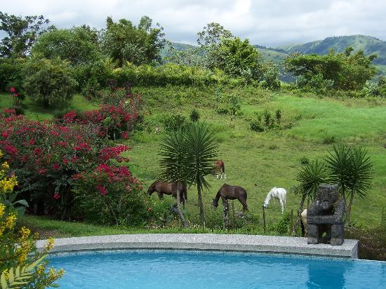 La Mansion Inn Arenal Hotel: Inn's Horses and Pool