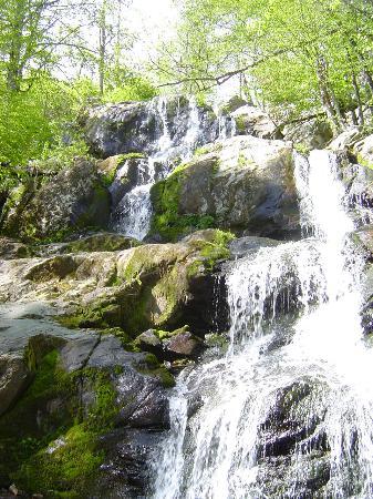 Big Meadows Lodge: Waterfall at Dark Hollow