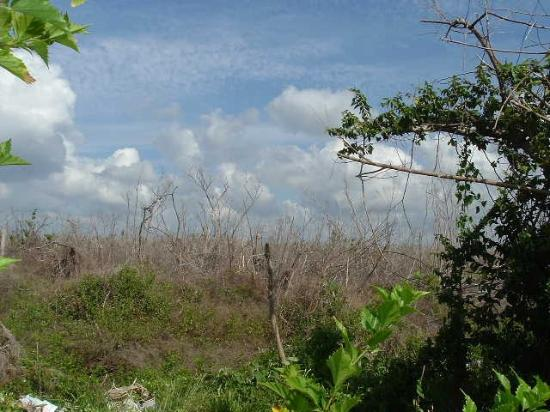 Villablanca Garden Beach Hotel: Jungle Damage