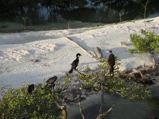 Holbox Island, Mexico: Isla Pajaros