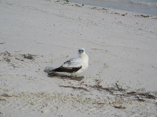Holbox Island, Mexico: Hi !