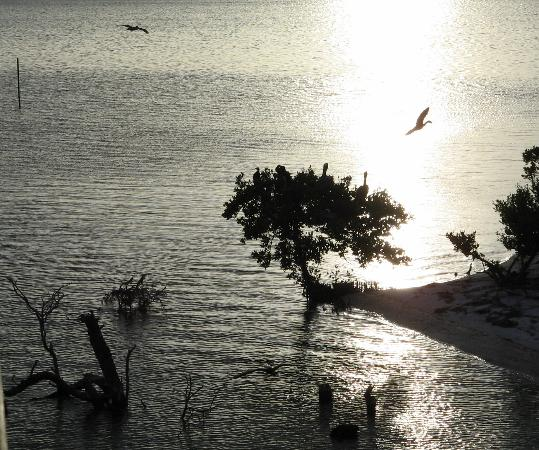 Holbox Island, México: Suset @ Isla Pajaros