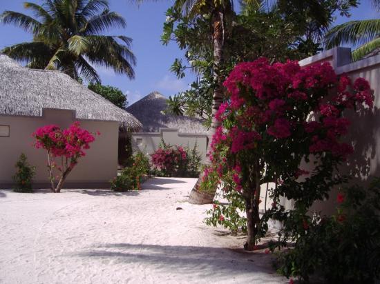 Baros Maldives: Vue extérieure d'une Villa