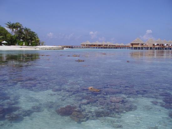 Baros Maldives: Coraux et pilotis