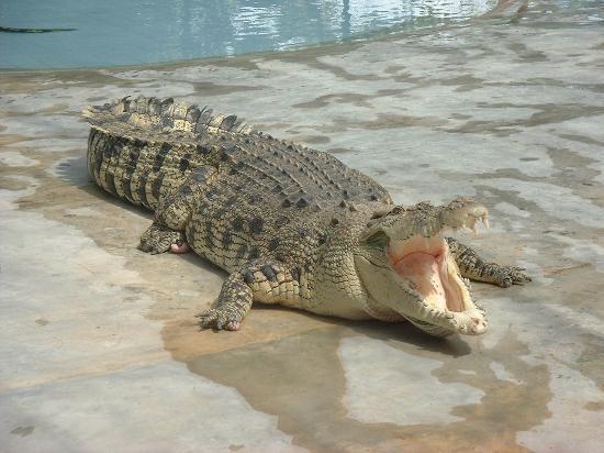 Crocodile Adventureland Langkawi : Langkawi crocodile farm