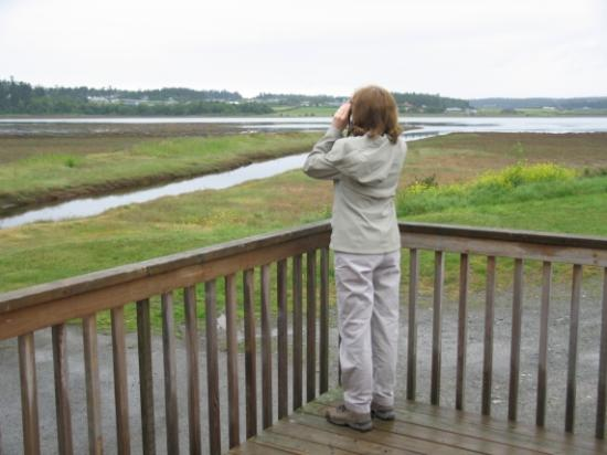 "Casey's Cove Inn: Birdwatching on the ""Back Porch"""