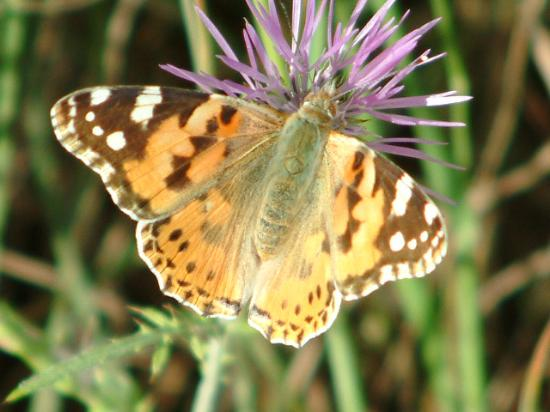 9 Muses Hotel Skala Beach: Butterfly