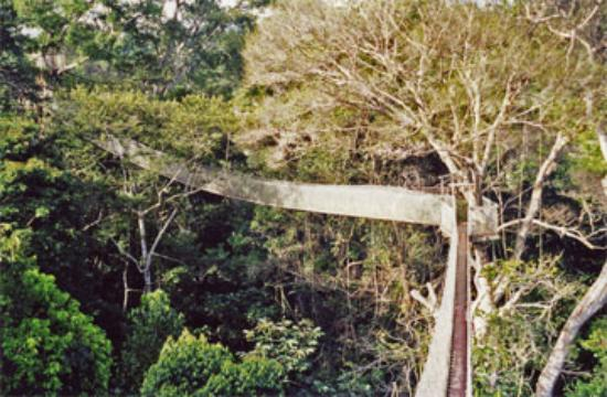 ExplorNapo Lodge: canopy walkway