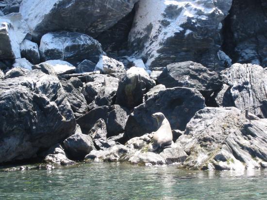 Bahia de Los Angeles: sea lion sunning himself on the rocks