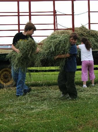 Jonde Lane Farm B&B: Noah and other guests got to help with morning chores.