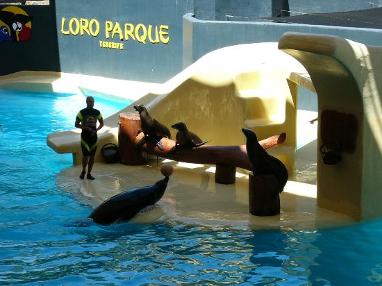 Casa Caribe Apartments: Loroparque. The seal show.