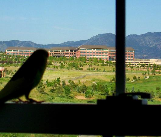 TownePlace Suites Boulder Broomfield: The parakeets were mesmerized by the view.