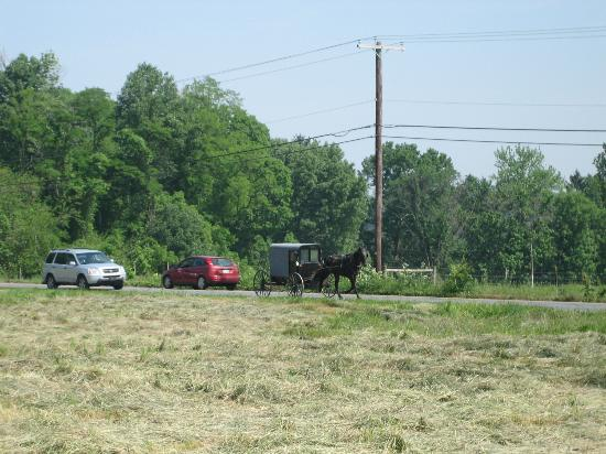 Flowers & Thyme Bed and Breakfast: An Amish buggy seen from the B&B's front yard