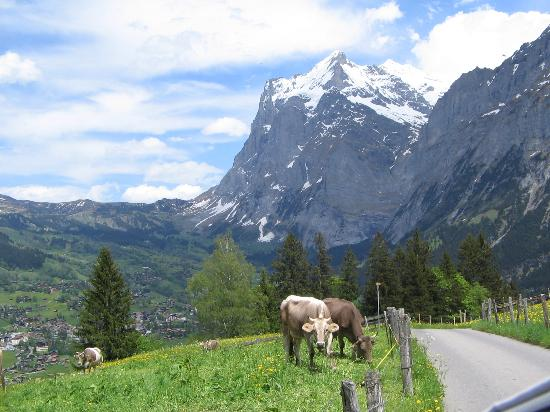 Belvedere Swiss Quality Hotel : Walking down to Grindelwald from Alpiglen
