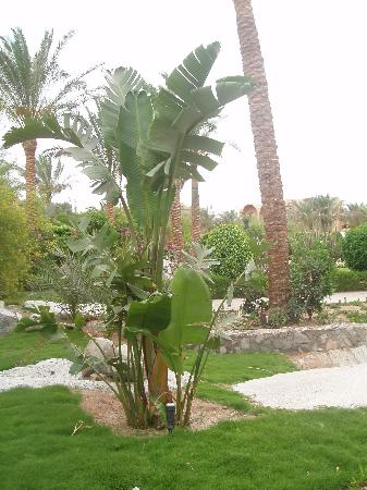 Jaz Makadina : Exotic plants