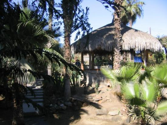 Las Palmas Casitas : The palapa (if you look close I'm standing next to it)