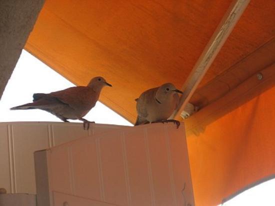 Astor Hotel: Doves!